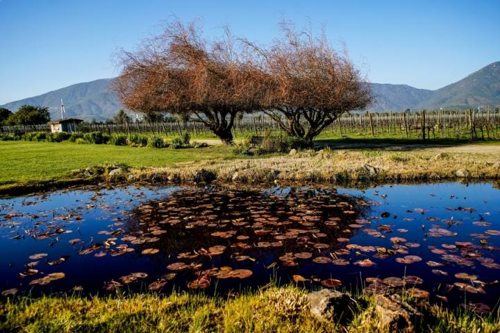 As melhores vinícolas para visitar no Chile pertinho de Santiago – 4 degustações e vinícolas que valem a pena noChile